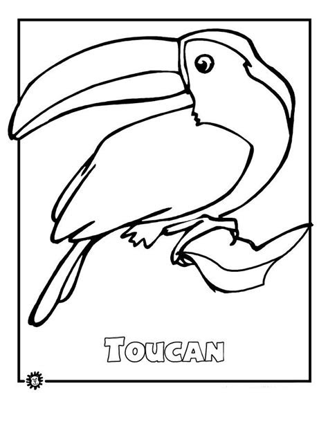 rainforest animals coloring pages  amazon rainforest