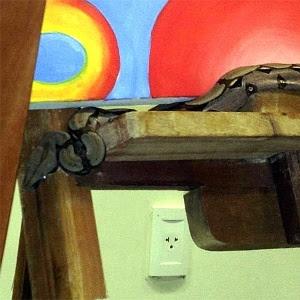 Jiboia é encontrada em sala de aula da UFPI