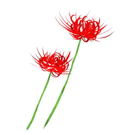 秋のお彼岸花ヒガンバナ手描きイラスト