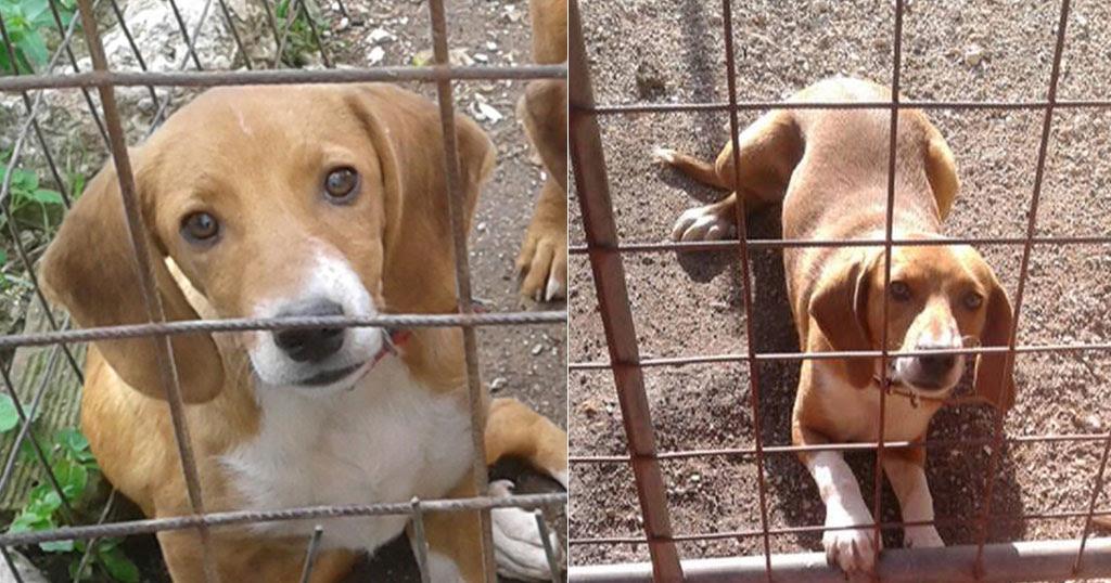 Αυτό είναι το σκυλάκι που πέταξαν τα κωλόπαιδα από το γκρεμό (ΦΩΤΟ)