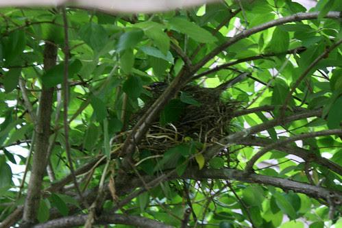 robin nest 111