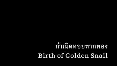 Birth of Golden Snail