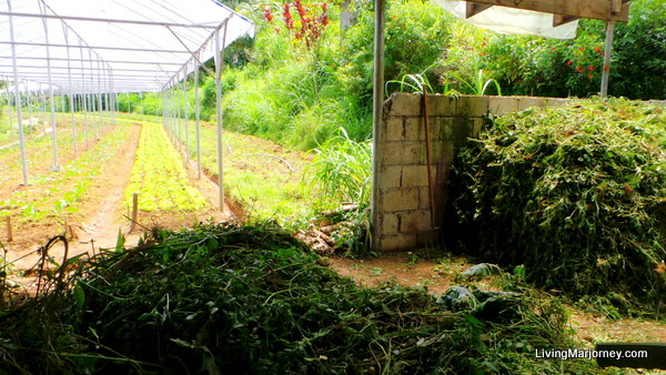 Compost area with wild plants and grass