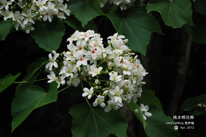 2012挑水桐花祭DSC_4527