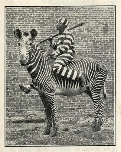 1932_jail jockey zebra stripes_sRGB_400