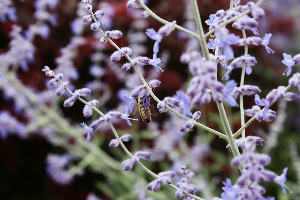 Blumen mit Biene im Bugapark