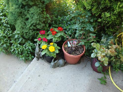 hello plants!