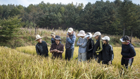 Rice harvest instruction at 최성현 Seonghyun Choi's natural farm in South Korea