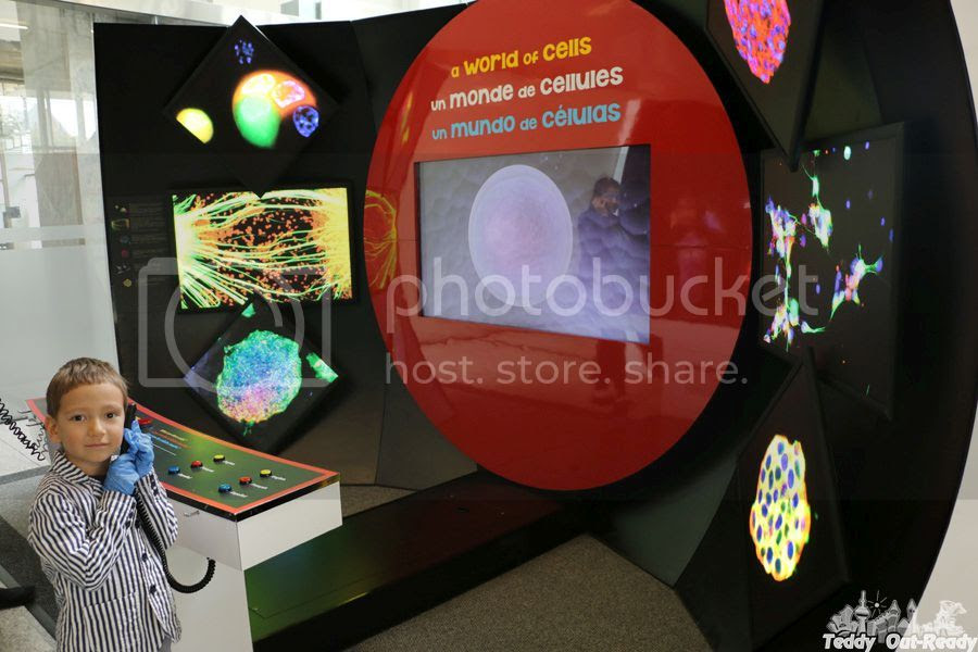 Stem Cell Exhibit
