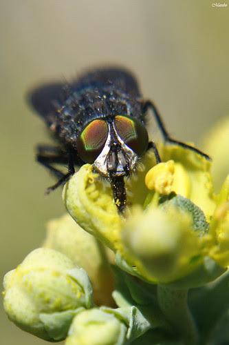 Macro mosca, fly by Alejandro Bonilla