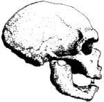 http://www.paleoanthro.org/static/home/skull_grey150.jpg