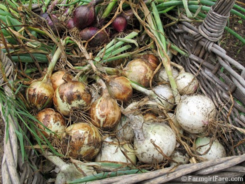 (23) Harvesting Red Candy Apple, Texas 1015, and White Bermuda Onions - FarmgirlFare.com
