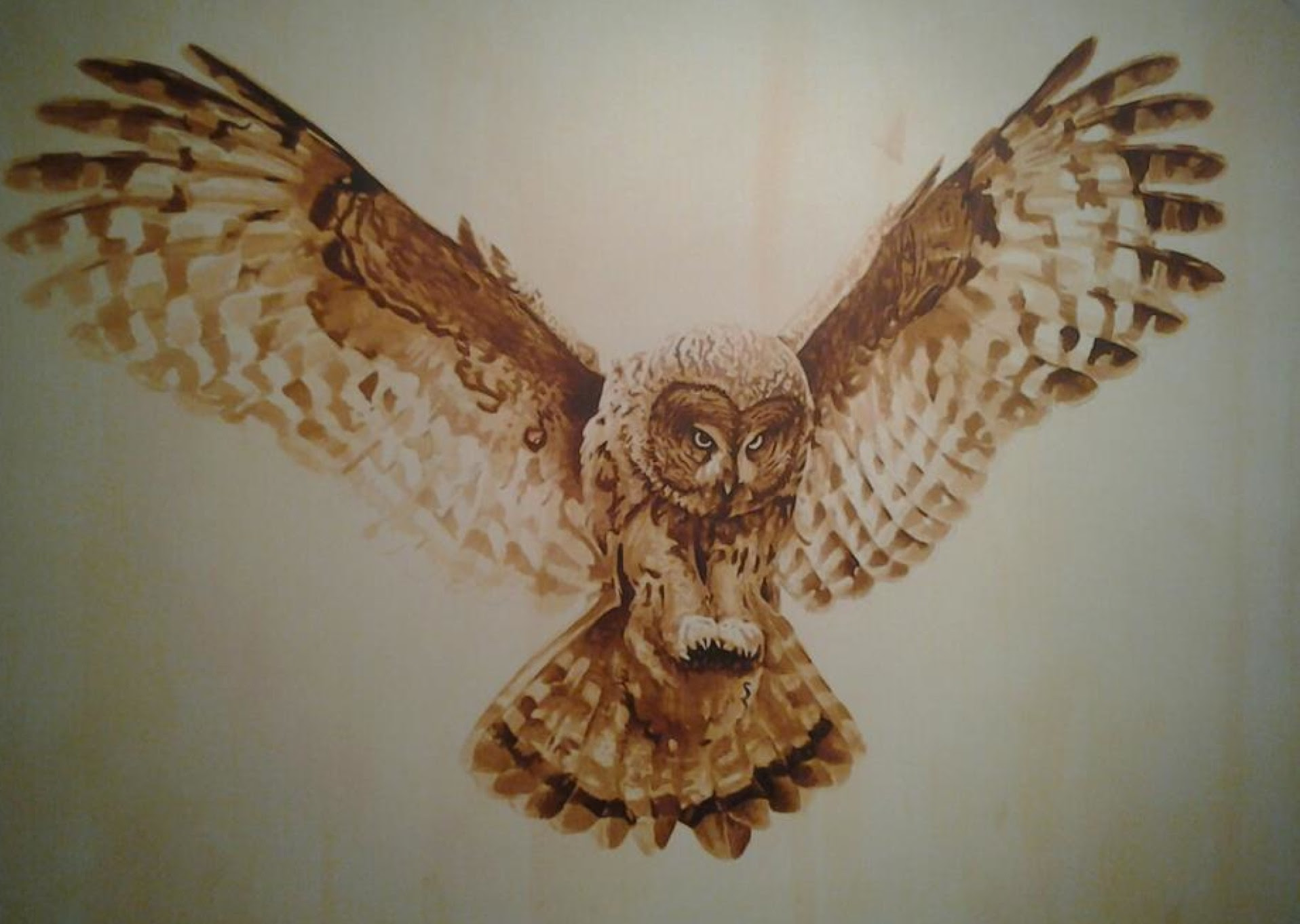 Pictures Of Snowy Owl Wings Spread Stargate Rasainfo