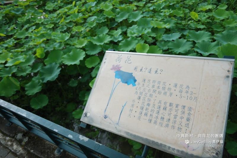 2011_0530_中興新村與荷花的邂遘DSC_4733
