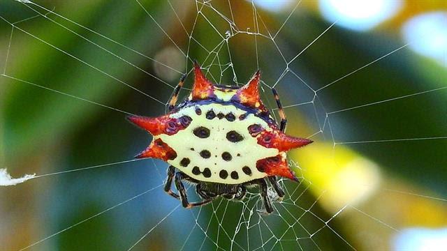 38 spinnen zum ausmalen  besten bilder von ausmalbilder