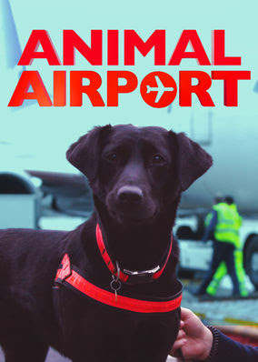 Animal Airport - Season 1
