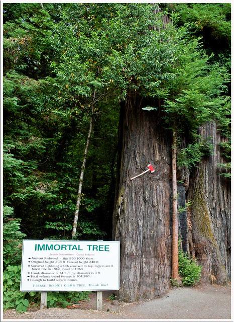 Vampire-Tree
