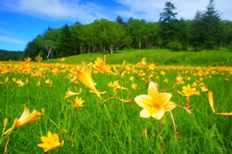DSC06642 Oze:Mt.Shihutsu Hike