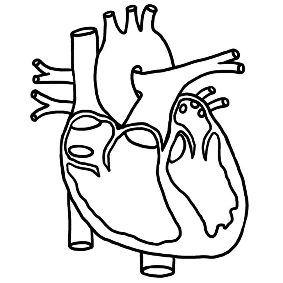 Heart Diagram, Blank - ClipArt Best
