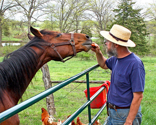 Carrot time! - Course when DH came walking up with carrots in hand, she forgot all about me and my camera!  LOL