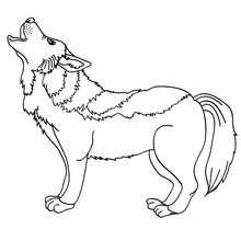 Dibujos Para Colorear Lobo Salvaje Eshellokidscom