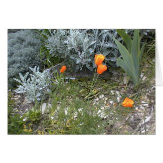 Scripture Card: CA Poppies Greeting Card