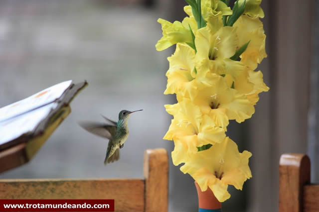 Regalarias Flores Amarillas En Peru Y En Rusia