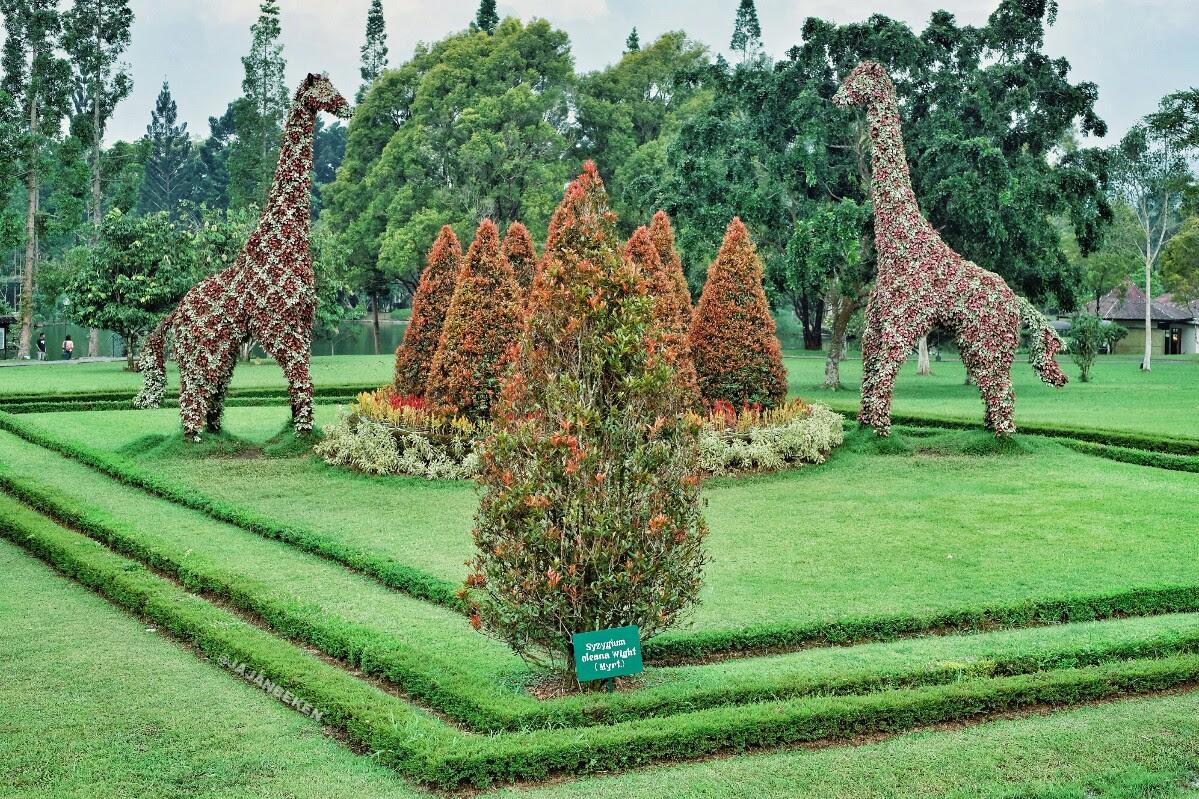 17 Objek Wisata di Taman Bunga Nusantara: Panduan Lengkap 2018 - JAJANBEKEN.COM