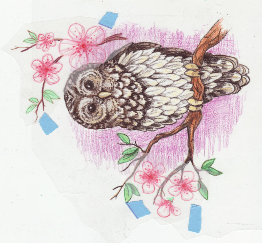 owl tattoo design by Kittencaboodles on DeviantArt