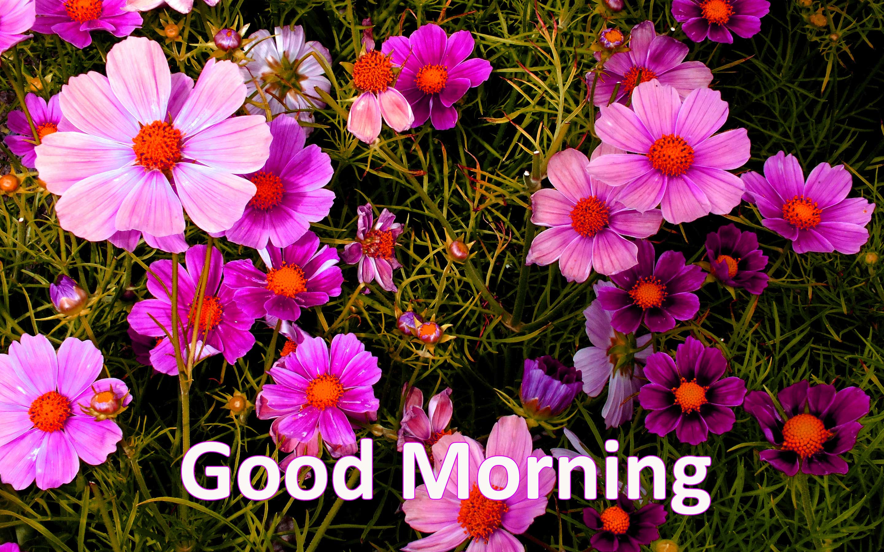 157 Good Morning Flowers Images Photos Pics Hd Download Here