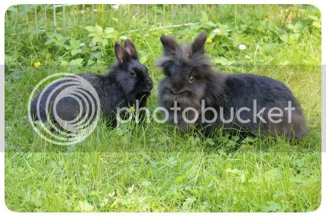 Kaninchen - Flou & Bootsmann