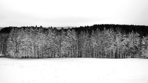 Ghost Wood 63200