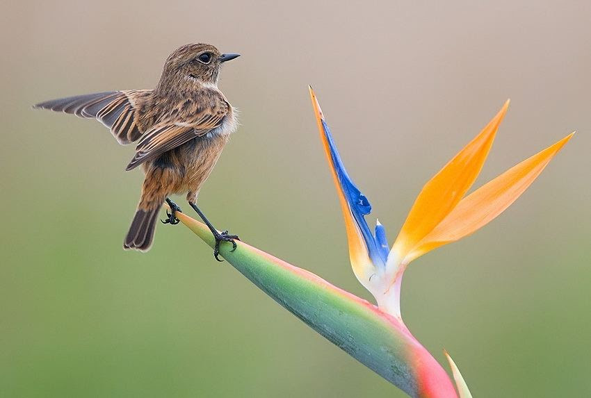 Fascinating photos of birds from the photographer Zander Yaqui