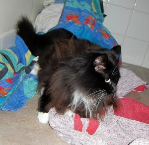 bath-towel-cat1