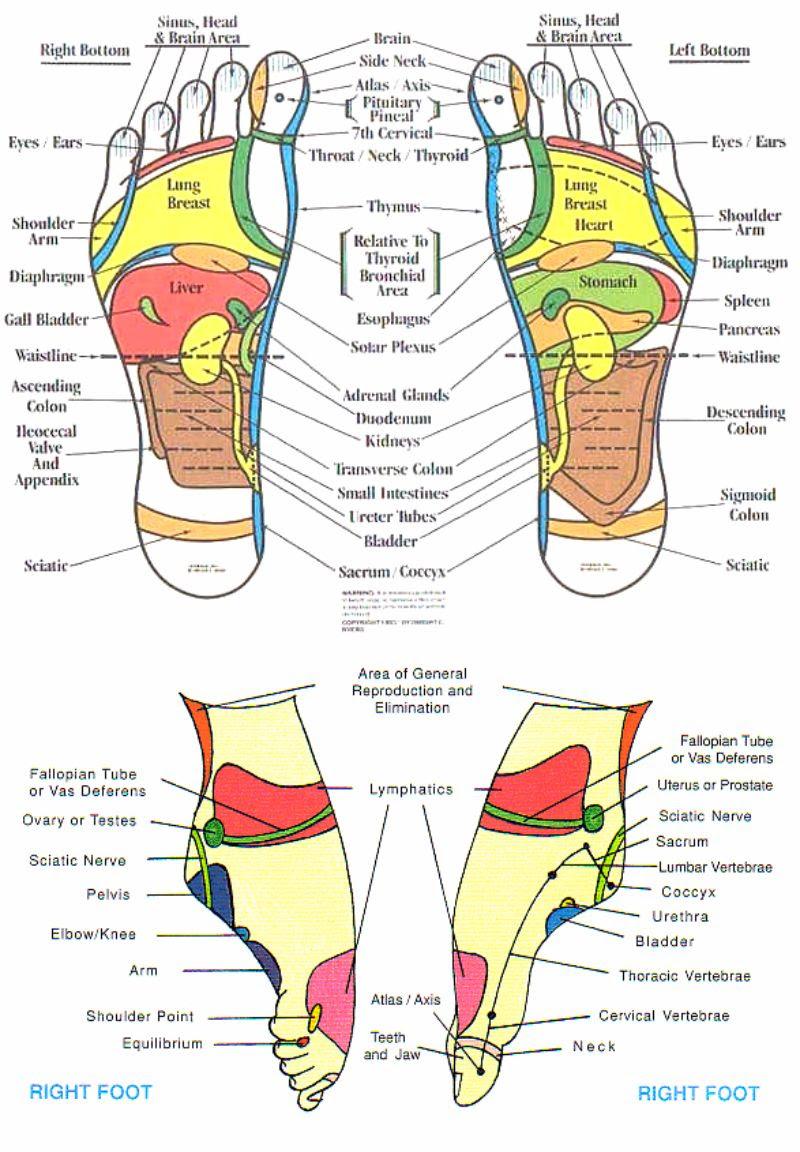 31 Printable Foot Reflexology Charts & Maps ᐅ TemplateLab