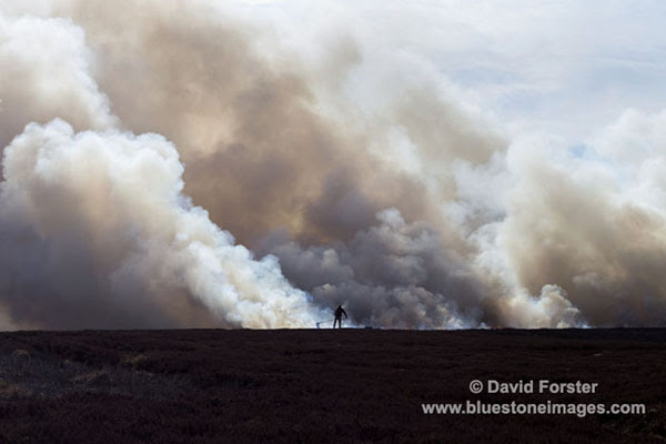 01M-8504 Heather Burning in Upper Teesdale County Durham