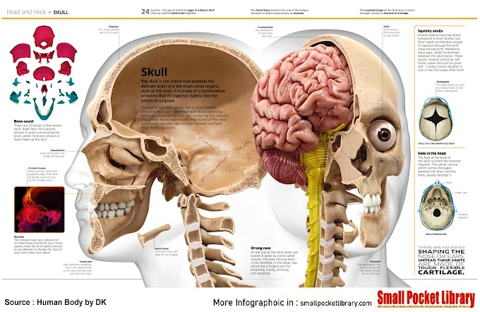 Infographic : Head and neck SKULL