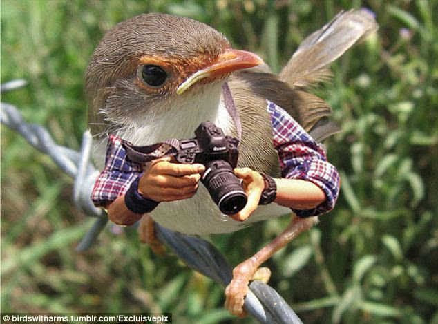 Who's twitching the twitchers? This tiny bird seems ready to capture bird watchers in their natural habitat