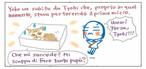 Yoko va subito da Tyobi che, proprio in quel momento, stava partorendo il primo micio.  Che mi succede? Mi scappa di fare tanta pupu`? Wow! Forza, Tyobi!!!