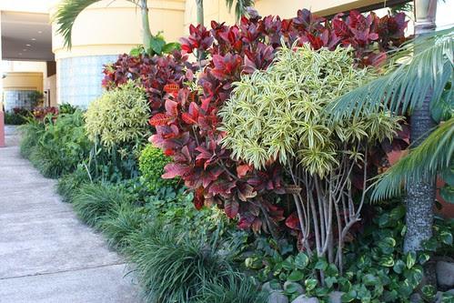 Hospital Cima landscaping