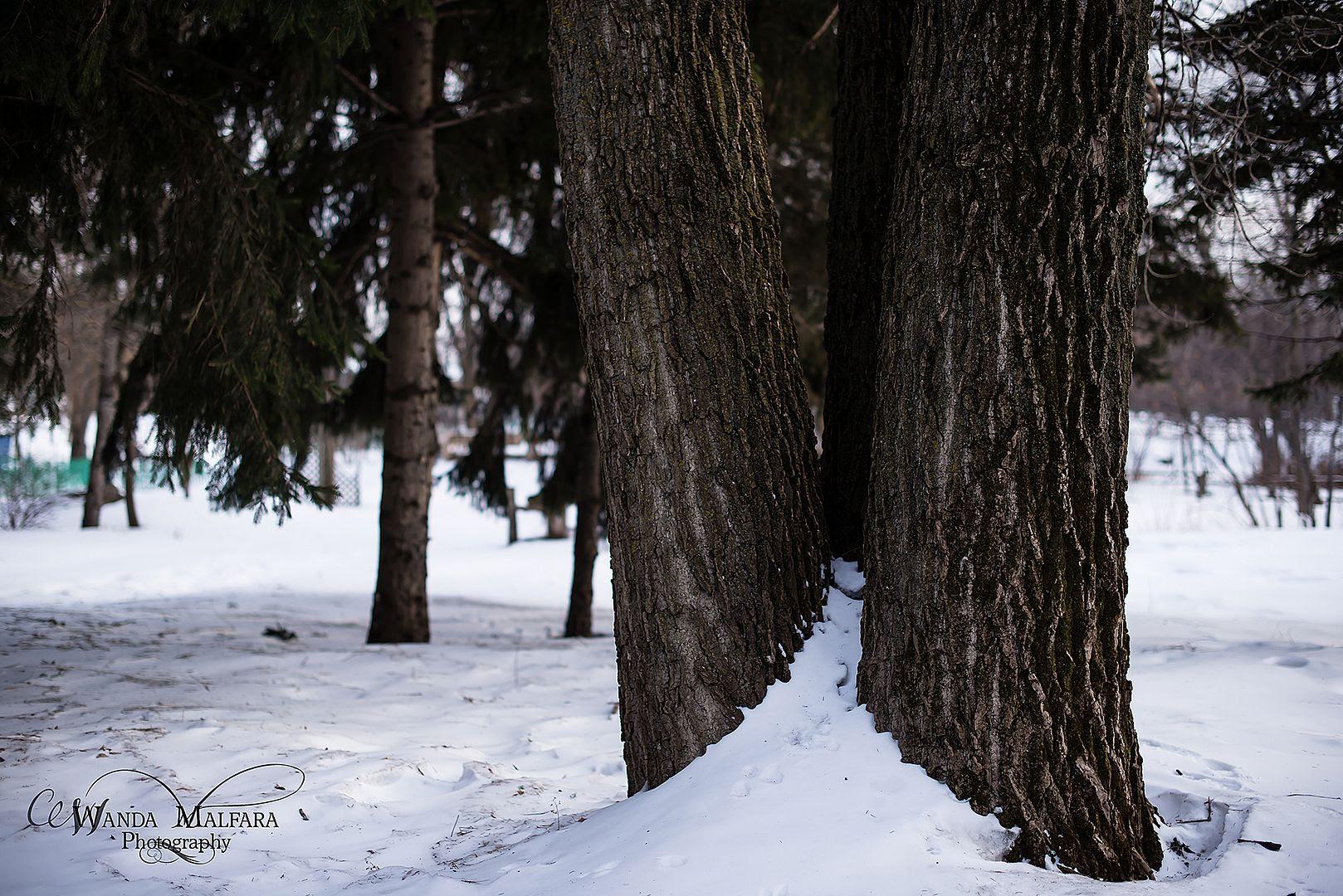 Fri Jan 31, 2014 photo _DSC7443wmweb_zps73a89818.jpg