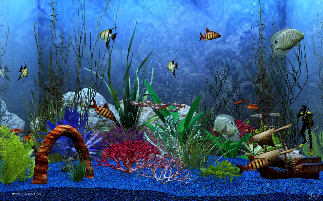 Aquarium View Desktop PC And Mac Wallpaper