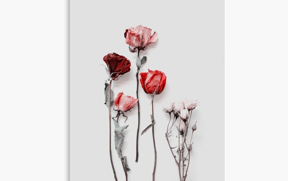 Pink Aesthetic Background Flowers : 1001 Ideas For A ...