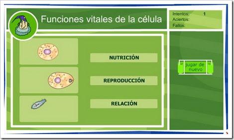 Funciones vitales de la célula