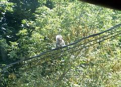 Squirrel_83009
