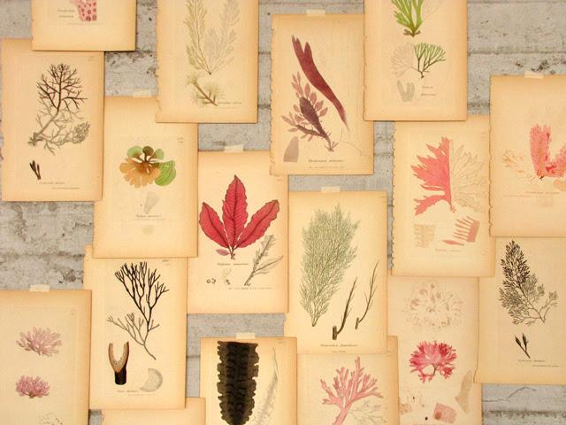 Seaweed prints detail