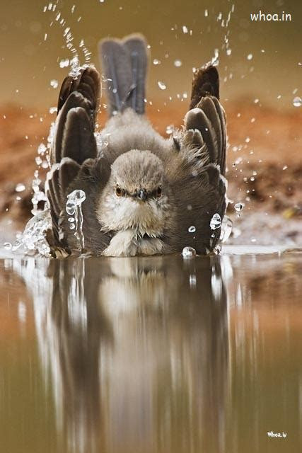 bird fun  water hd mobile wallpaper