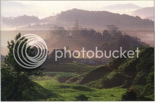 bdf3.jpg Cameron Highlands image by frankinasia