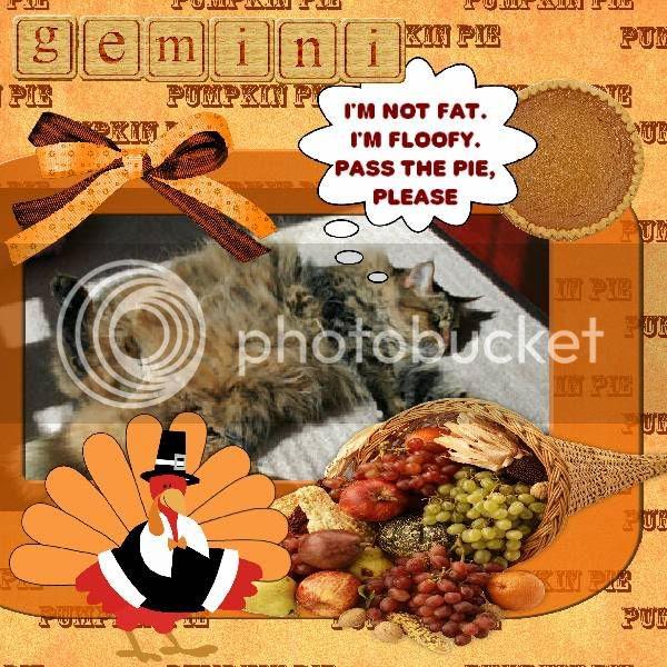 Tabby Cat,Domestic Cat,Talking Turkey
