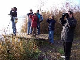 Censos d'ocells hivernants